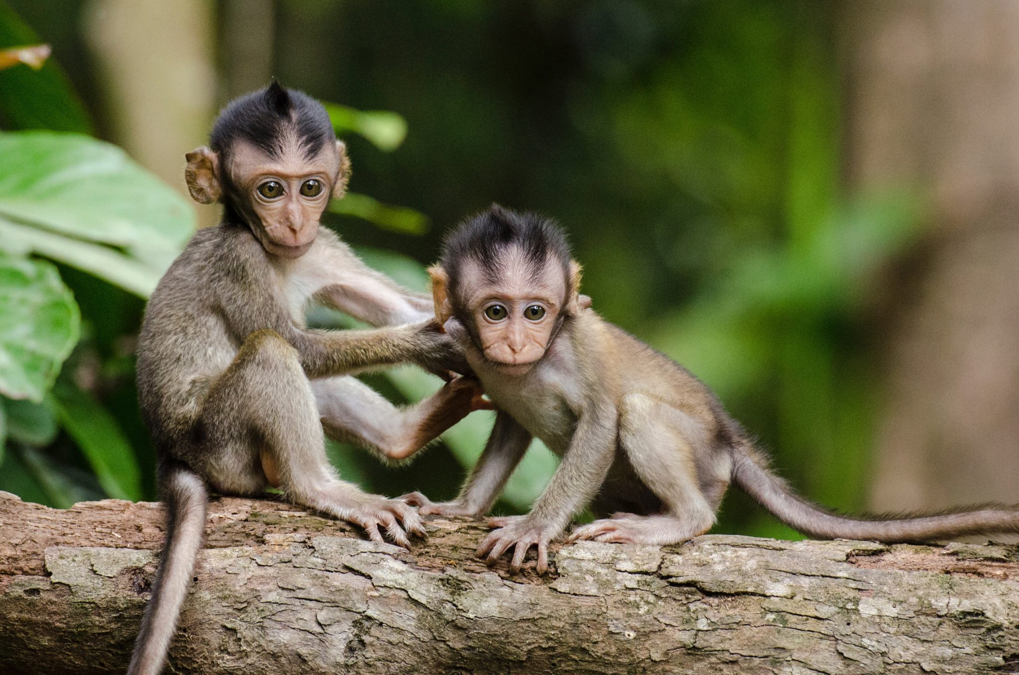 Teaching Sharing: 1 Tip You Should Know! 2 monkeys on a log